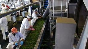 Verduras de la fábrica de proceso almacen de video