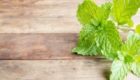 verduras de la menta fresca Fotografía de archivo libre de regalías