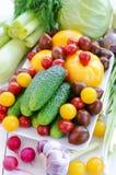 Verduras de la primavera: Pepinos, diversos tomates, ajo, apio, calabazas, col, perifollo, eneldo, ajo, ajo verde, oni de la prima Foto de archivo