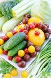 Verduras de la primavera: Pepinos, diversos tomates, ajo, apio, calabazas, col, perifollo, eneldo, ajo, ajo verde, oni de la prima Imagenes de archivo