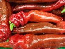 Verduras de las pimientas rojas Fotos de archivo