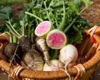 Verduras de raíz frescas Imágenes de archivo libres de regalías