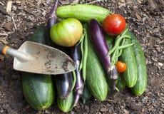 Verduras del jardín Fotografía de archivo