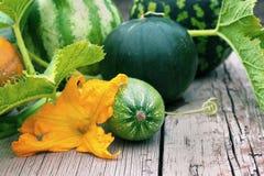 Verduras del otoño con la flor del calabacín Imágenes de archivo libres de regalías