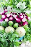 Verduras del surtido de la primavera en la cesta Foto de archivo libre de regalías