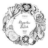 Verduras determinadas dibujadas mano del vector Composición redonda de la frontera Tomate, cebolla, col, pimienta, puerro Arte gr libre illustration