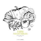 Verduras dibujadas mano de la granja Calabaza, aceituna, tomate, cebolla del puerro, col Ejemplo grabado vector Mercado de los gr ilustración del vector