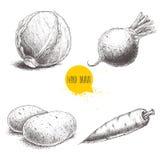 Verduras dibujadas mano del estilo del bosquejo fijadas Col, raíz de la remolacha, patatas y zanahoria stock de ilustración