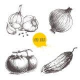 Verduras dibujadas mano del estilo del bosquejo fijadas Tomates, cebolla, pepino y ajos con pimienta Imagen de archivo