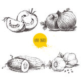 Verduras dibujadas mano del estilo del bosquejo fijadas Tomates, cebollas, pepinos y ajos cortados Fotografía de archivo