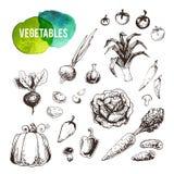 Verduras dibujadas mano fijadas Iconos del vector del vintage ilustración del vector