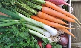 Verduras en bandeja Imagen de archivo libre de regalías