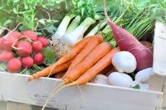 Verduras en bandeja Foto de archivo