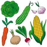 Verduras en el fondo blanco Imagen de archivo libre de regalías