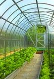 Verduras en invernadero Imagen de archivo libre de regalías