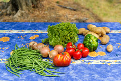 Verduras en jardín francés Imágenes de archivo libres de regalías