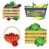 Verduras en la caja Foto de archivo libre de regalías