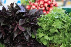 Verduras en un mercado de los granjeros Imagen de archivo