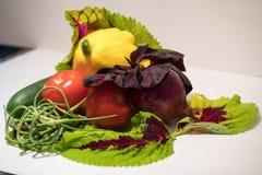 Verduras escogidas frescas Fotografía de archivo libre de regalías