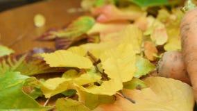 Verduras estacionales (otoño) en las hojas metrajes