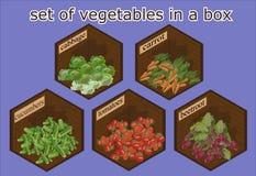Verduras fijadas en caja de madera Imágenes de archivo libres de regalías