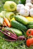 Verduras frescas Foto de archivo libre de regalías