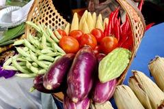 Verduras frescas, apenas escogiendo en el jard?n imagen de archivo libre de regalías