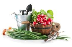 Verduras frescas con los utensilios de jardinería fotografía de archivo