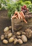 Verduras frescas en cajón Fotografía de archivo libre de regalías