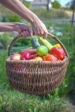 Verduras frescas en cesta Imagen de archivo libre de regalías