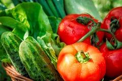Verduras frescas en cesta tejida Imagenes de archivo