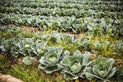 verduras frescas en jardín exterior Imagen de archivo libre de regalías