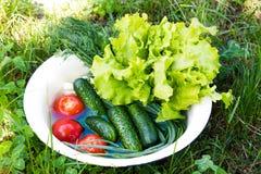 Verduras frescas en un taz?n de fuente D?a asoleado imágenes de archivo libres de regalías