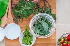 Verduras orgánicas de la col rizada y del vegano de las hierbas Foto de archivo