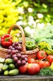 Verduras orgánicas en cesta de mimbre en el jardín Imagen de archivo libre de regalías
