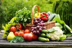 Verduras orgánicas en cesta de mimbre en el jardín Fotografía de archivo libre de regalías