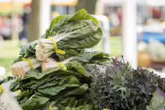 Verduras orgánicas frescas - el manojo de ensalada frondosa se pone verde en una granja Foto de archivo