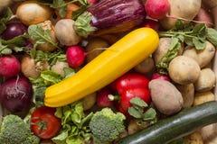 Verduras orgánicas y sanas Imagen de archivo libre de regalías