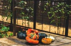 Verduras recientemente escogidas encima de una tabla concreta dentro de un invernadero imagen de archivo libre de regalías