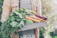 Verduras sabrosas frescas de Adult Man Holding del granjero en caja de madera en madrugada del jardín imágenes de archivo libres de regalías