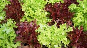 Verduras verdes Foto de archivo