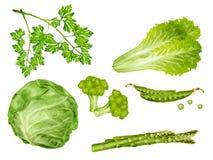 Verduras verdes fijadas Fotografía de archivo libre de regalías