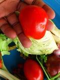 Verduras y arte culinario Imagen de archivo libre de regalías