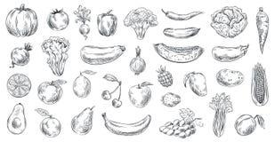 Verduras y frutas bosquejadas Alimento biológico exhausto de la mano, grabando el sistema del ejemplo del vector del bosquejo de  libre illustration