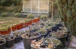 Verdure à la maison Photographie stock libre de droits