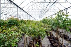 Verdure Photo libre de droits