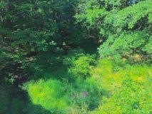 verdure Photographie stock libre de droits