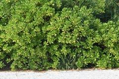 Verdure avec le sable photo stock