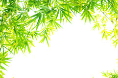 The verdure bamboo foliage Royalty Free Stock Images
