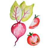 Verdure barbabietola e pomodori dell'acquerello Immagine Stock